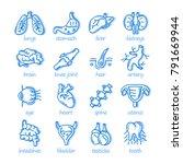 human organ. lungs  stomach ... | Shutterstock .eps vector #791669944