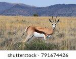 springbock   kruger national... | Shutterstock . vector #791674426