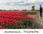 typical dutch image with a... | Shutterstock . vector #791696596