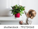 baby girl touching flowers in a ... | Shutterstock . vector #791724163