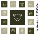 set of 13 zoology outline icons