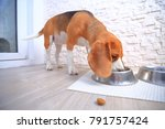 dogs food background. piece of... | Shutterstock . vector #791757424