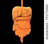 human digestive system anatomy. ... | Shutterstock . vector #791772460