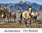 a group of horses running in a... | Shutterstock . vector #791782654