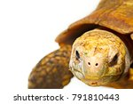 Stock photo high resolution close up macro photo of elongated tortoise face indotestudo elongata in front of 791810443
