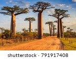 beautiful baobab trees at... | Shutterstock . vector #791917408