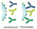 antigen antibody complex... | Shutterstock . vector #791944084
