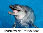 happy dolphin opened her mouth... | Shutterstock . vector #791950900