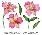 watercolor set of flowers  hand ... | Shutterstock . vector #791982169