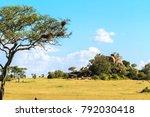 endless savanna of serengeti.... | Shutterstock . vector #792030418