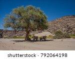 A Smaal Herd Of Desert...