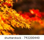 maple tree in autumn beautiful... | Shutterstock . vector #792200440