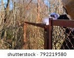 welder makes a fence in the... | Shutterstock . vector #792219580