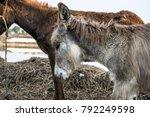 Poor An Innocent Burro Donkey...