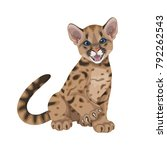 little spotted angry puma.young ... | Shutterstock .eps vector #792262543