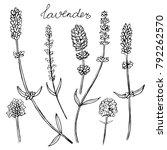 set of lavender flowers... | Shutterstock .eps vector #792262570