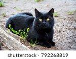 cat. a beautiful  black cat...   Shutterstock . vector #792268819