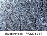 Small photo of Woods nature landscape in the winter day. Snow covered trees in winter forest. Winter forest with trees. Cold day in snowy winter forest.