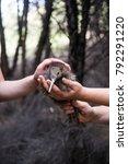 baby kiwi bird being nursed in... | Shutterstock . vector #792291220