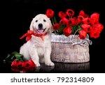 Cute labrador retriever puppy...
