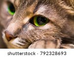 Portrait of a kind cat with big ...