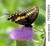 Small photo of Swallowtail butterfly on a lesser burdock flower on a shore of the Lake Ontario in Toronto, Canada, August 15, 2013
