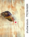 Small photo of the snail Achatina and the little red heart on white wooden background. soft selective focus
