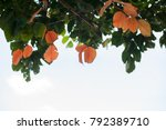 beautiful leaves on white...   Shutterstock . vector #792389710