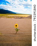 yellow flower growing out of...   Shutterstock . vector #792391840