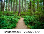path through forest pacific...   Shutterstock . vector #792392470