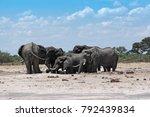 elephant group at a waterhole... | Shutterstock . vector #792439834