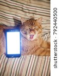 Small photo of Ginger Cat and Smartphone