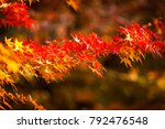 maple tree in autumn beautiful... | Shutterstock . vector #792476548