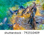 view of a group of humboldt... | Shutterstock . vector #792510409
