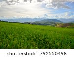 Landscape rice field with fluffy cloud sky
