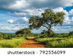 punda maria in north of kruger... | Shutterstock . vector #792556099