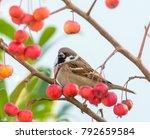 eurasian tree sparrow sitting... | Shutterstock . vector #792659584