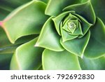 Succulent Echeveria Plant At...