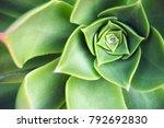 succulent echeveria plant at... | Shutterstock . vector #792692830
