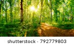 Path Through A Spring Forest I...