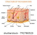 human skin layers vector... | Shutterstock .eps vector #792780523