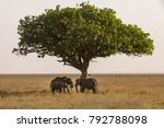 elephants with youngsters are... | Shutterstock . vector #792788098