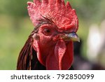 brown rooster with red cockscomb | Shutterstock . vector #792850099