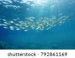 school of fish with sunlight... | Shutterstock . vector #792861169