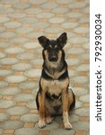 Small photo of black and tan dog sitting on a brick floor