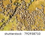 barnacle group on the beach | Shutterstock . vector #792938710