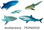 sharks. different shark species ... | Shutterstock . vector #792960520