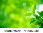 closeup nature view of green... | Shutterstock . vector #793009330