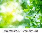 closeup nature view of green... | Shutterstock . vector #793009333