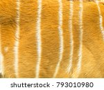 pattern and texture of leather... | Shutterstock . vector #793010980